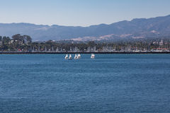Group of Small Sailboats Stock Photography