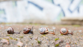 Group of small snails going forward Stock Image
