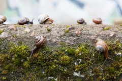 Group of small snails royalty free stock images