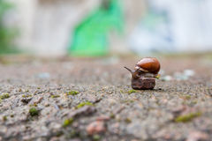 Group of small snails royalty free stock photo