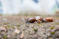 Group of small snails royalty free stock image