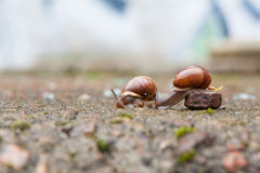 Group of small snails stock photography