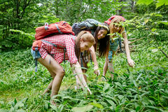 Group of smiling friends with backpacks hiking Royalty Free Stock Photo
