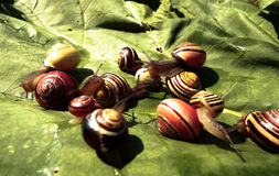 Group of snails Royalty Free Stock Images