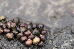 A group of snails royalty free stock photo