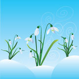 Group of snowdrops. On blue background Royalty Free Stock Images