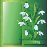 Group of snowdrops Royalty Free Stock Photography
