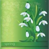 Group of snowdrops. On green background Royalty Free Stock Image