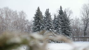 Group of snowy fir trees in winter Park. stock footage