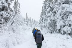 Group of some people on winter hike in mountains, backpackers walking on snowy forest Stock Photos