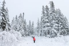 Group of some people on winter hike in mountains, backpackers walking on snowy forest Royalty Free Stock Images