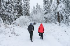 Group of some people on winter hike in mountains, backpackers walking on snowy forest Royalty Free Stock Photos