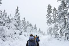 Group of some people on winter hike in mountains, backpackers walking on snowy forest Royalty Free Stock Photo