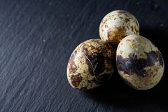 Group of some quail eggs on a dark background, top view, close-up, selective focus, copy space, backlight. Group of some spotted quail eggs on a black Royalty Free Stock Photography