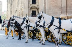 A group of spanish white horses carriage in front of Seville cat. Hedral. Touristic attraction royalty free stock photos