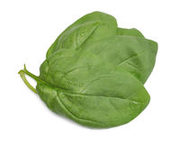 Group of spinach leaves Royalty Free Stock Images