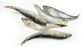 Group of Sprat fish Stock Images
