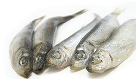 Group of Sprat fish Stock Photography
