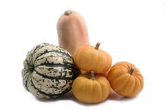 Group of squash. Royalty Free Stock Photos