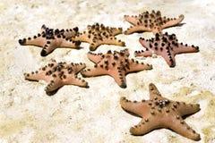 Group of starfish on beach Royalty Free Stock Photo