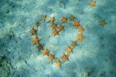 Group of starfish in heart shape underwater Stock Images