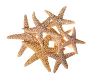 Group of Starfish Isolated on White Background Stock Photo