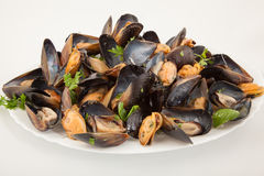 Group steamed fresh mussels on white plate Stock Photo