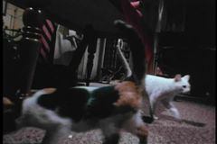 Group of stray cats invading a house at night stock video