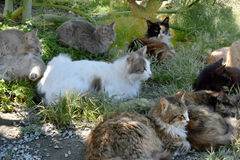 Group of stray cats. Group of little tabby stray cats resting in the shadow Royalty Free Stock Photography