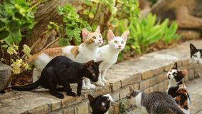 Group of stray cats sitting on pathway curb, looking up as someone is about to throw them some food. royalty free stock image