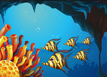 A group of striped-colored fishes near the coral reefs Royalty Free Stock Images