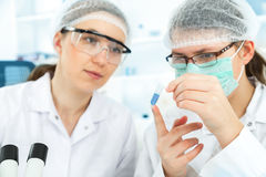 Group of the students working at the laboratory. Stock Photo