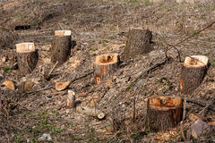 Group of stumps Royalty Free Stock Images