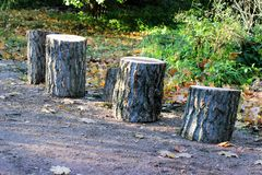Group of stumps Stock Photography