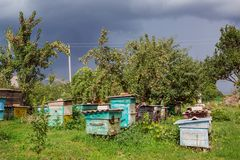 A group of swarm of bees on an old wooden beehive in a farm garden. Apiary, swarm, sheltered from the wind and with a good stay. In the sun stock image