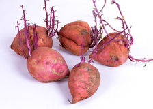 Group of sweet potato on a white background stock photography