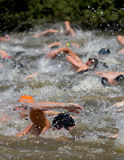 A group of swimmers. Swimmers in a triathlon competition Stock Photography