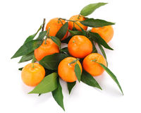 Group of tangerines with leaves. Some tangerines on white background stock photos