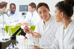 Group Of Technicians Working In Laboratory. Looking At Each Over Stock Photography