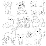 Group of small dogs hand drawn line art. Group of ten breeds of small dogs, hand drawn line art Royalty Free Stock Photography