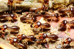 Group of termite. Was making nest Stock Photography