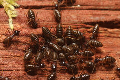 Termite. Group of termite eating wood Stock Photo