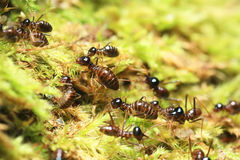 Group of termites Stock Photos