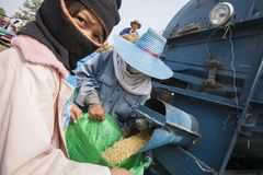 A group of Thai farmers use a machine to separate rice kernels, Stock Images