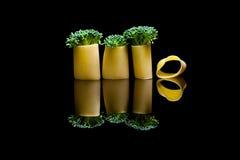 A group of three broccoli embedded into pasta manicotti on a bla Stock Photo