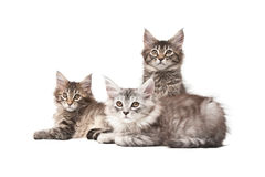 Group of three kittens Royalty Free Stock Photos