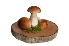 Group of three penny buns with green club-moss on the wooden cross-section royalty free stock photo