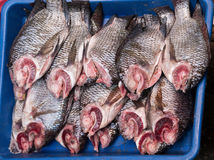 Group of tilapia fish Royalty Free Stock Photos