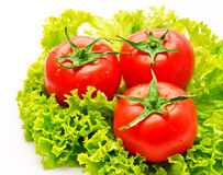 Group of tomato and green salad   Royalty Free Stock Images