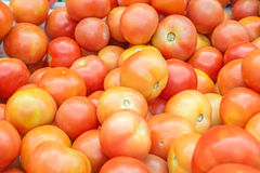 Group of tomato in market Stock Image